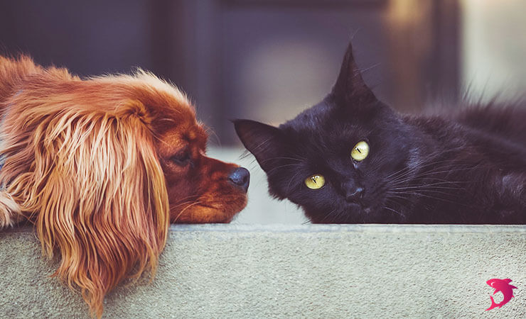 Dogs vs. Cats: Compare and Contrast Essay